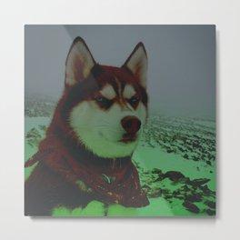 Red Husky Metal Print