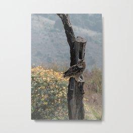 Cape Eagle Owl Metal Print