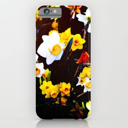 Daffodils 19 iPhone Case