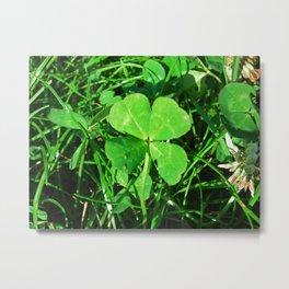 Four Leaf Clover 2012-06-15 18.03.20. Metal Print