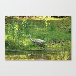 Heron Standing In Water Canvas Print