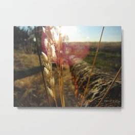 Sun Gazing Wheat Metal Print