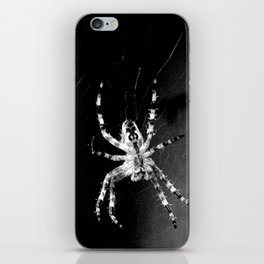 Spider in Amsterdam iPhone Skin