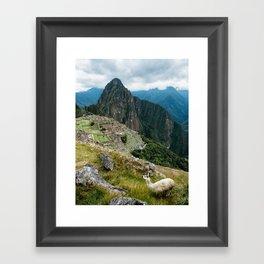 Alpaca Picchu Framed Art Print