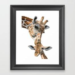 Mother And Baby Giraffe Framed Art Print