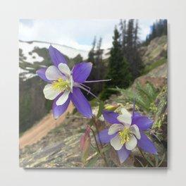 Watercolor Flower, Columbine 06, Fall River Road, RMNP, Colorado Metal Print