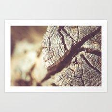 Cracked log Art Print