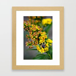 Bright as a Bumble Framed Art Print