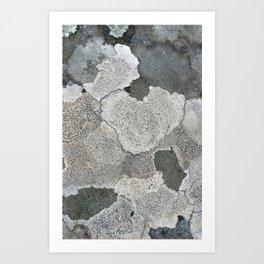 Lichen Magic Art Print
