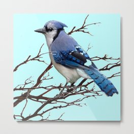 AMERICAN BLUE JAYS ART BLUE WINTER ART DESIGN Metal Print