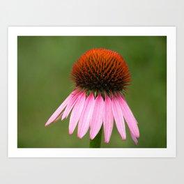 Wilted Flower Art Print