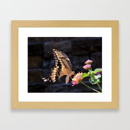 Swallowtail Overexposed Framed Art Print