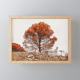Orange and black tree after forest fire, Algarves, Portugal | Photo Print, Travel Photography Europe Framed Mini Art Print