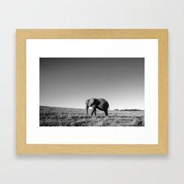 Lone female elephant walking along African savanna Framed Art Print