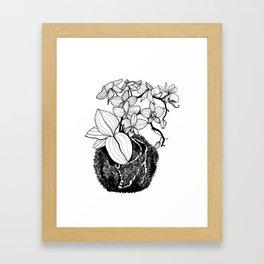 Orchid Kokedama Nr.1 Framed Art Print