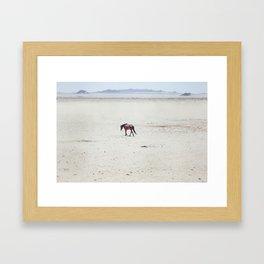 Horse 2013 Framed Art Print