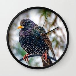 European Starling Wall Clock