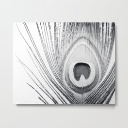 Black and White Peacock Feather Photography, Grey Nature, Neutral Gray Feathers Metal Print