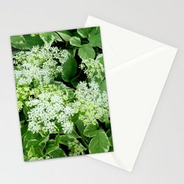 AWESOME DELICATE GREEN LACE FLOWERS Stationery Cards