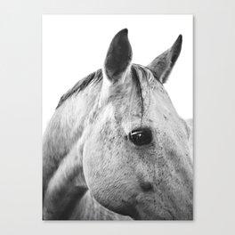 Silver Horse II Canvas Print