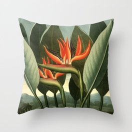 Birds of Paradise : Temple of Flora Throw Pillow