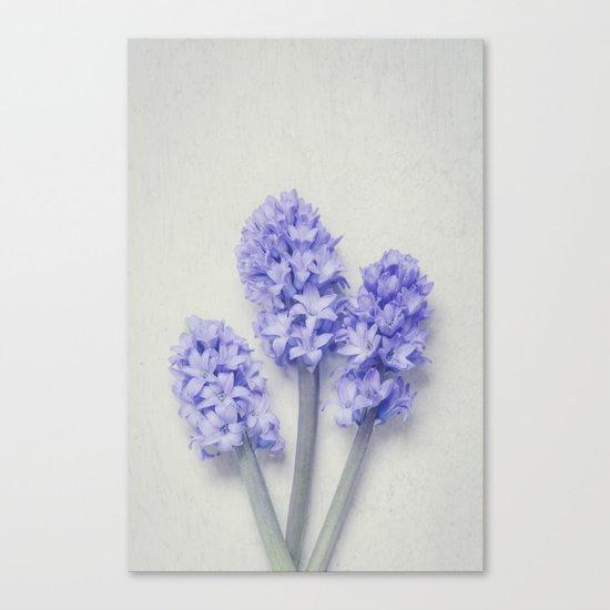 Bright Lilac Hyacinths Canvas Print