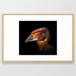 Hornbill Framed Art Print