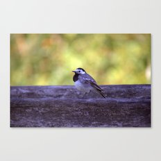 White Wagtail 4123 Canvas Print