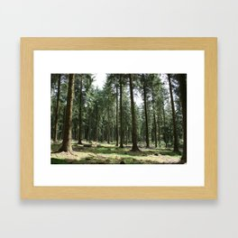 Dartmoor woods Framed Art Print
