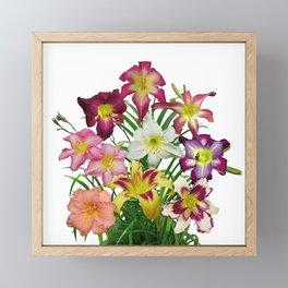Celebration of daylilies II, Hemerocallis flowers Framed Mini Art Print