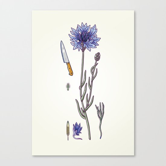blue cornflower and knife Canvas Print