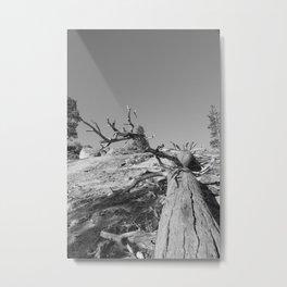 Lost Life Metal Print
