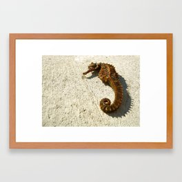 Seahorse Seahell Framed Art Print