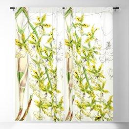 A orchid plant - Vintage illustration Blackout Curtain
