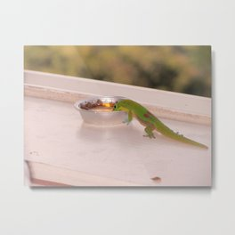 Hawaiian Gecko Metal Print