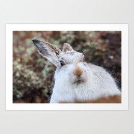 white wild rabbit Art Print