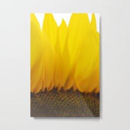 Sunflower VII Metal Print