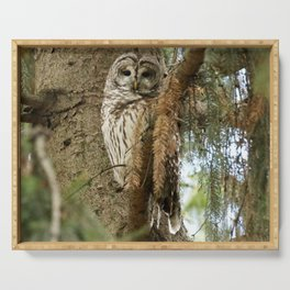 Beautiful Barred Owl Serving Tray