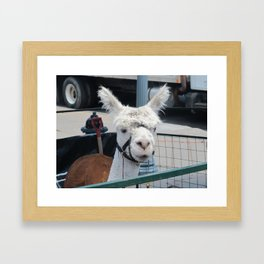 Alpaca 2 Framed Art Print