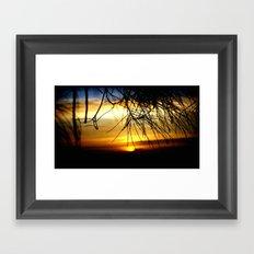 Sunset between Norfolk pine Needles Framed Art Print