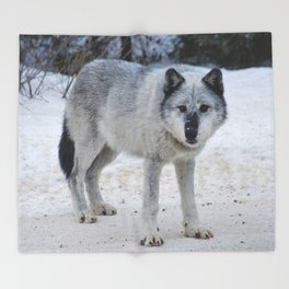 Lone wolf of the Canadian Rocky Mountains Throw Blanket