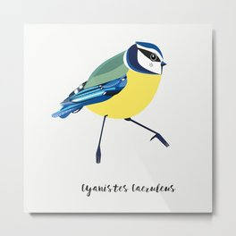 Blue Tit Bird Metal Print