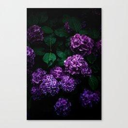 Hydrangea 01 Canvas Print