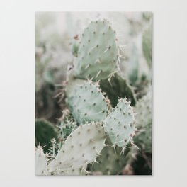 Cactus Closeup Canvas Print