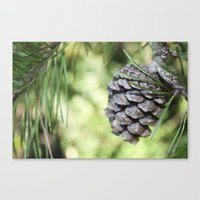 rileigh smirl Canvas Prints featuring Pinecone by Rileigh Smirl