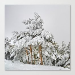 """""""Ghost forest"""". Square.  After the snowstorm Canvas Print"""