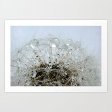 Dandelion droplets Art Print