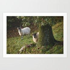 Sheep behind a tree. Cumbria, UK. Art Print