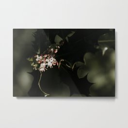 Flowering holly bush in the sun | Colourful Travel Photography | Veluwe, Holland (The Netherlands) Metal Print