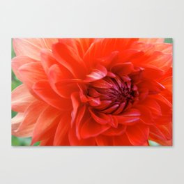 German Dahlia Canvas Print